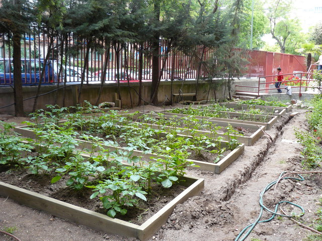 Acho si o que crear un huerto escolar - Como hacer un huerto en el jardin ...