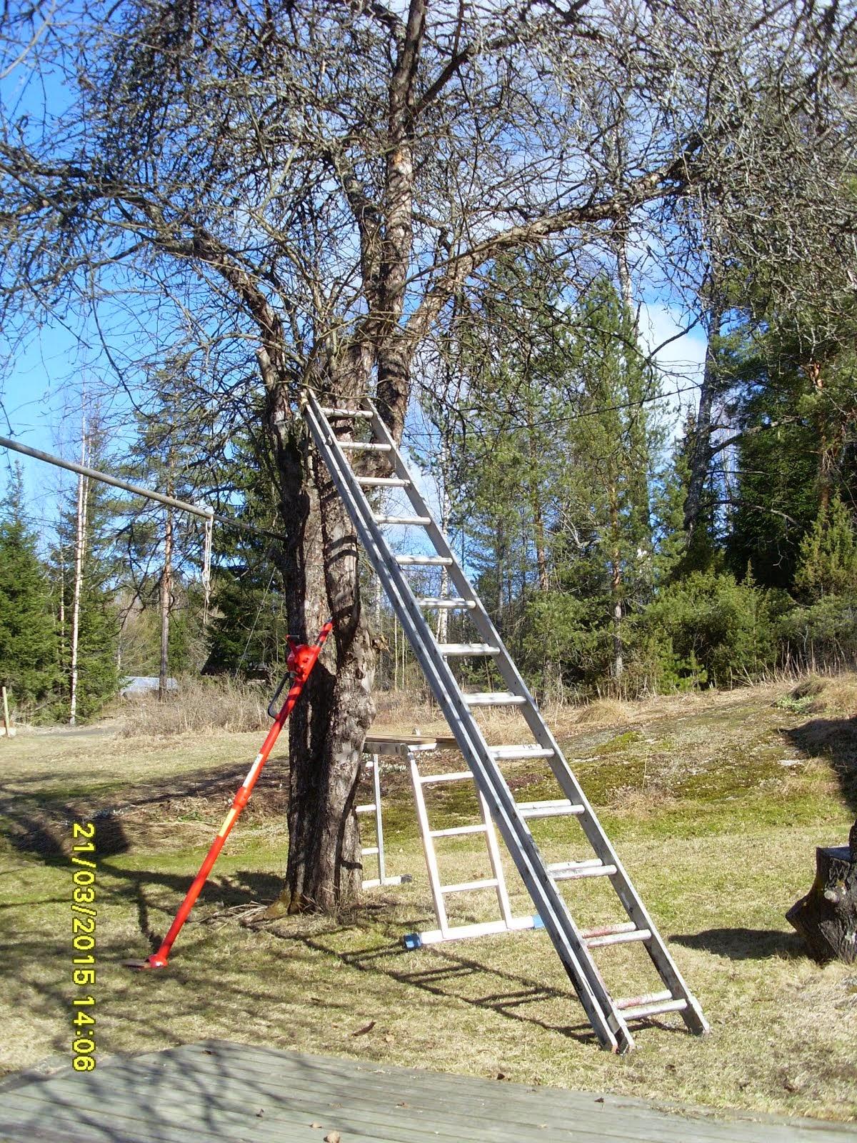 Omenapuiden leikkaukset ja omenapuiden harvennukset keväisin ja kesällä stalpen kaadonsuuntaajalla
