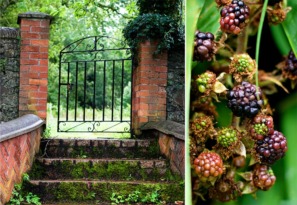 diptych of a garden gate and stairway and blackberries