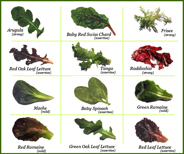 Horticulture plant identification care and maintenance salad