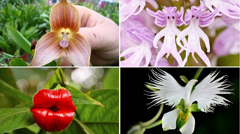 17 Flores magistralmente disfrazado de otra cosa