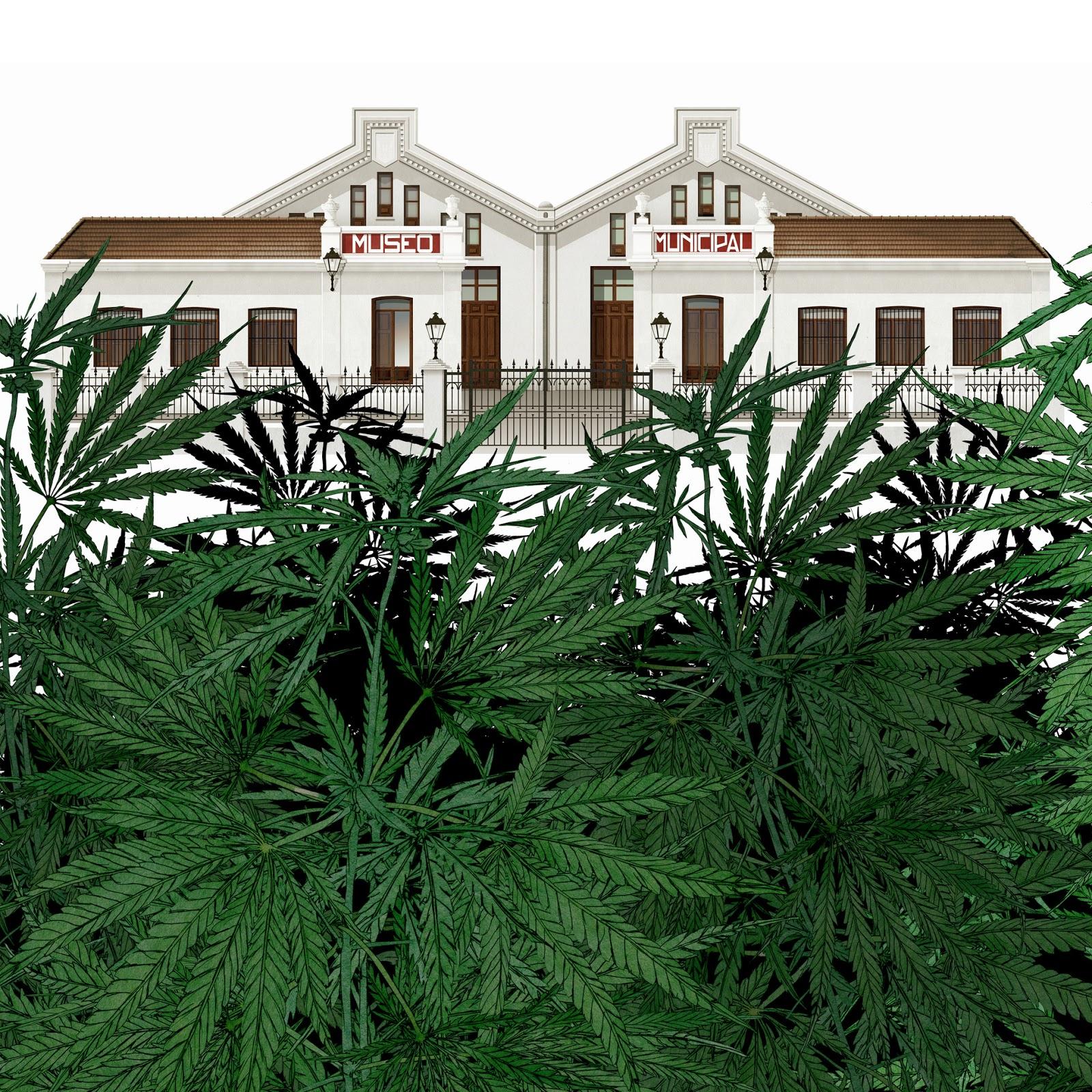 mariguana, polemica, museo
