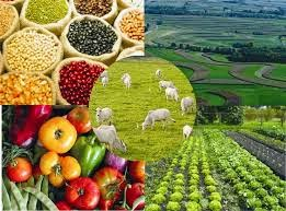 Agricultura patronal o que prevalece?