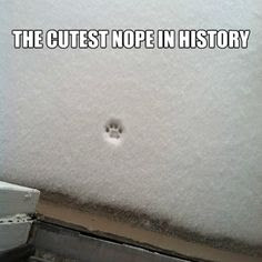 cutest nope, snow nope, cat nope, dog nope, cat refuses to go outside, dog refuses to go outside, pet doesn't like snow