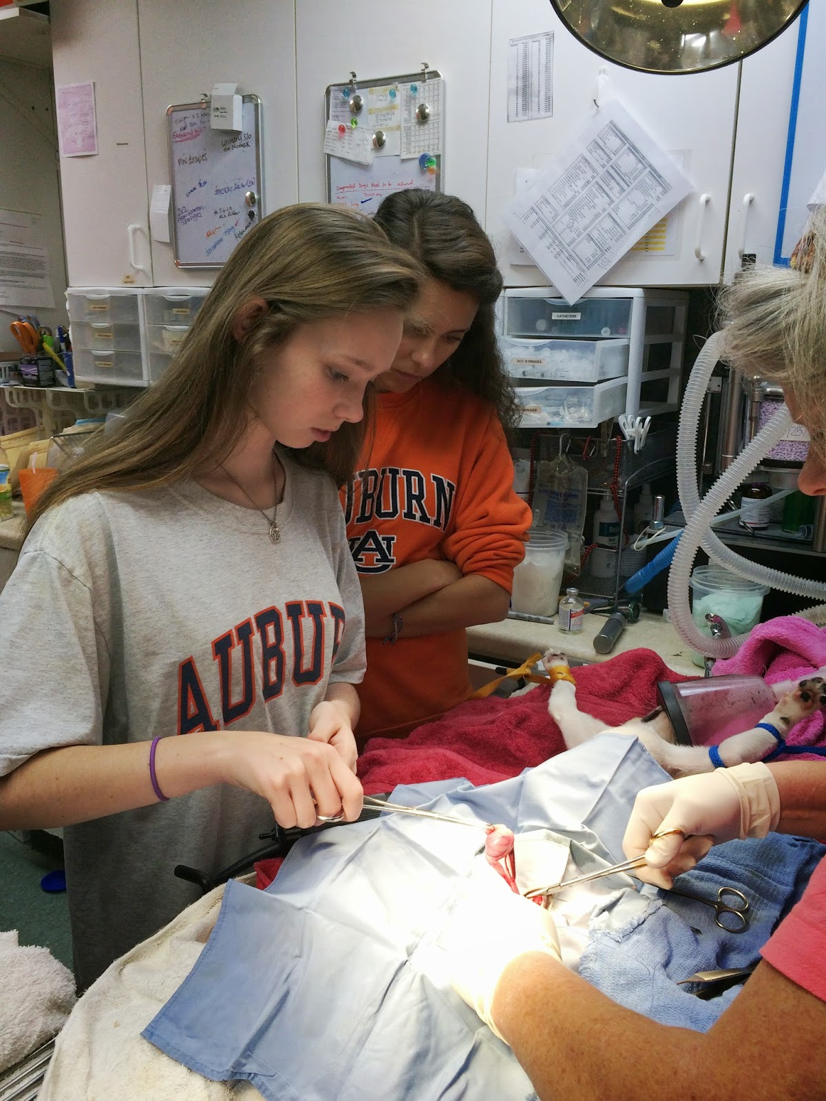 Catholic Anatomy Students Assist in Surgery at Shelter 3