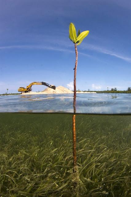 Mangrove et activités humaines dans le sud de Bimini Bahamas