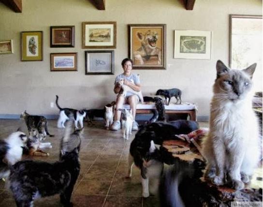 Menggagumkan Wanita Ini Bela 700 Ekor Kucing Dalam Rumah