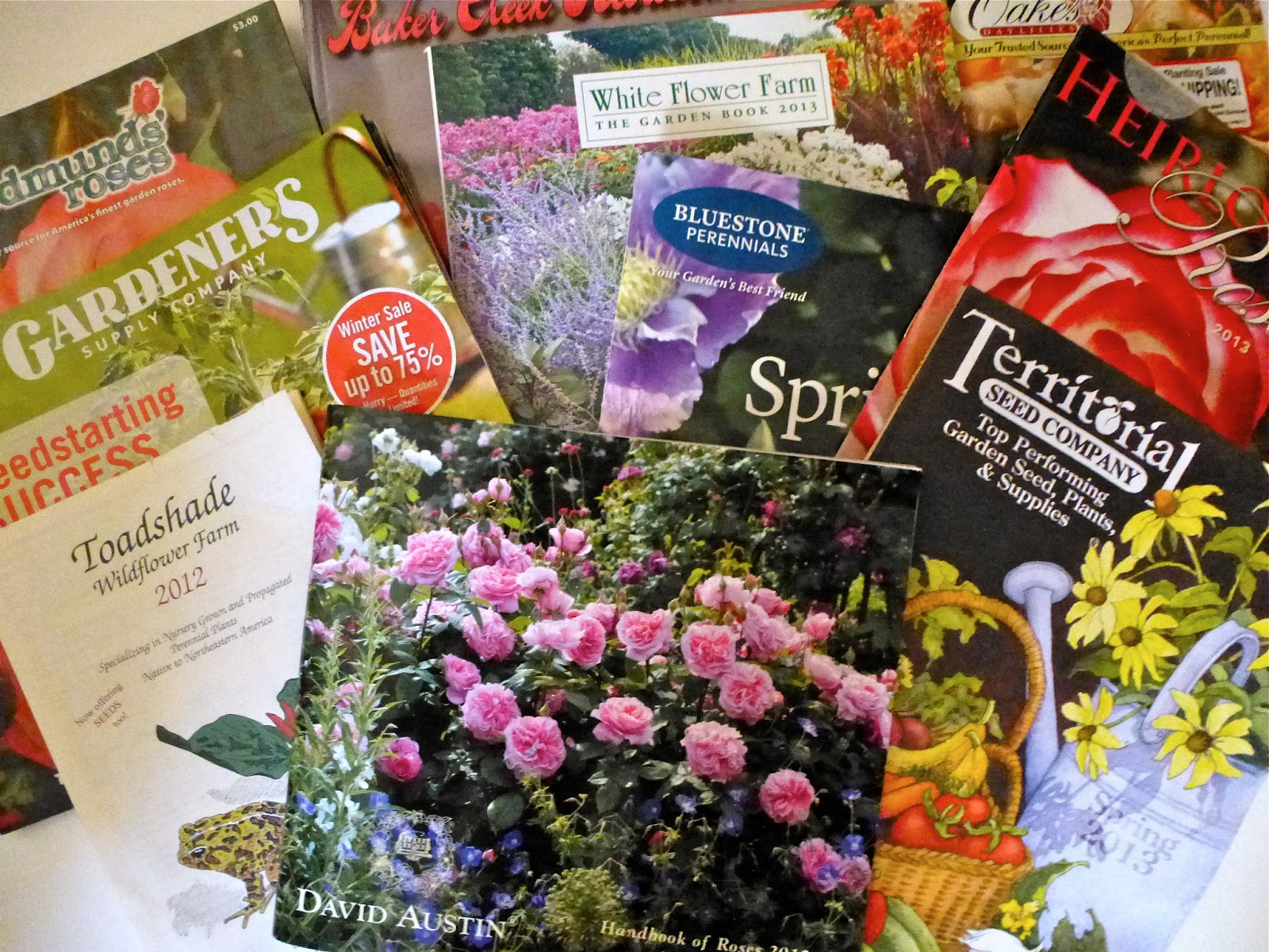 Tis The Season When Roses And Catalogues Cometh The Dirt Diaries