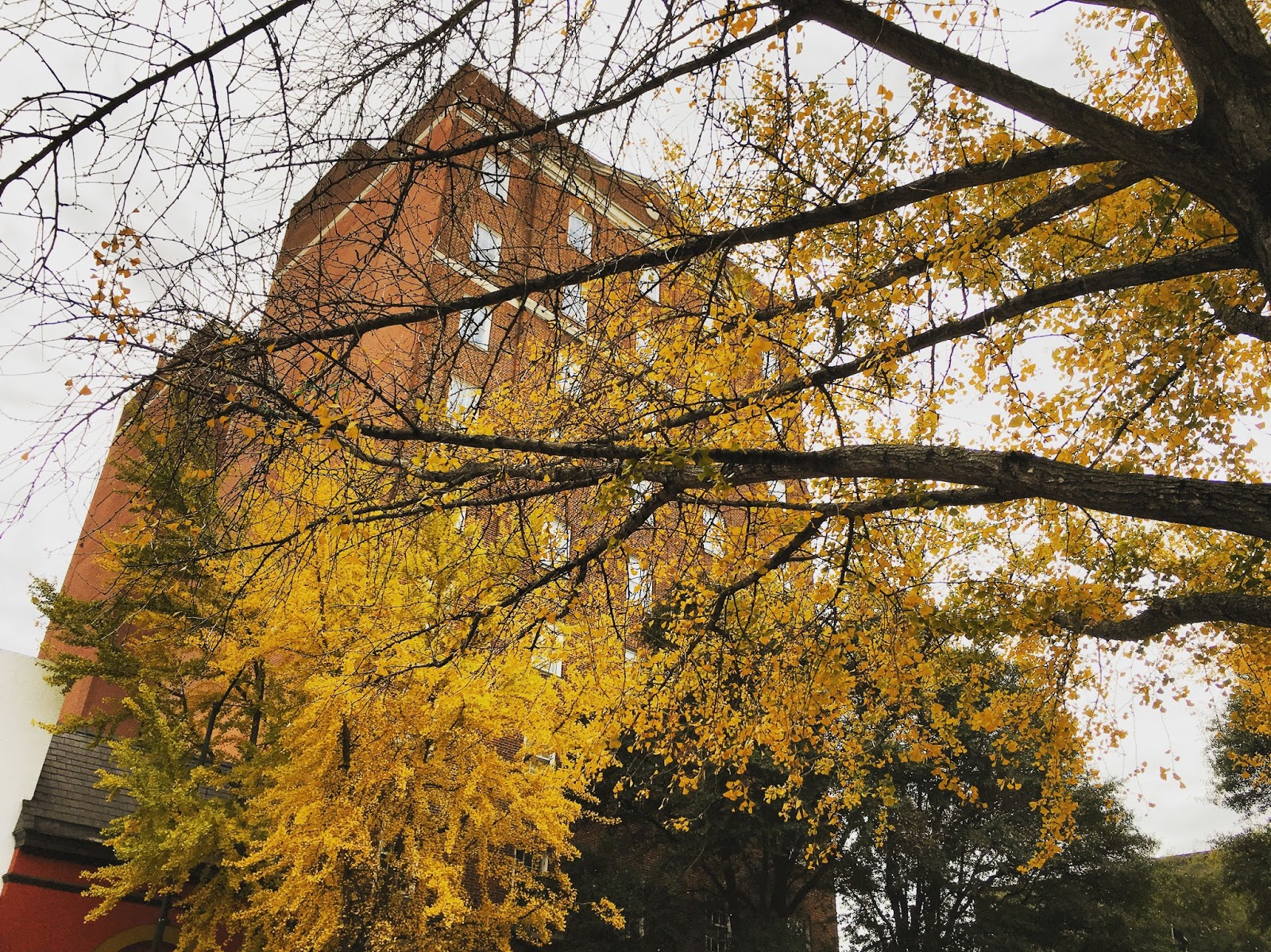 yellow-tree