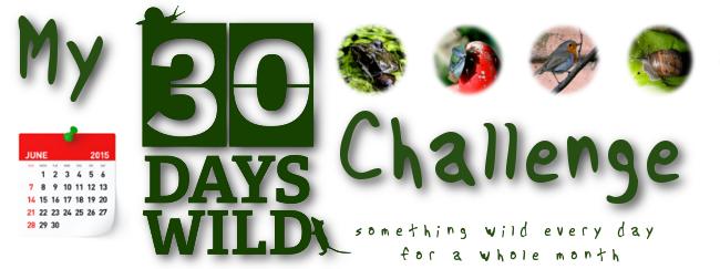 My 30 Days Wild Challenge
