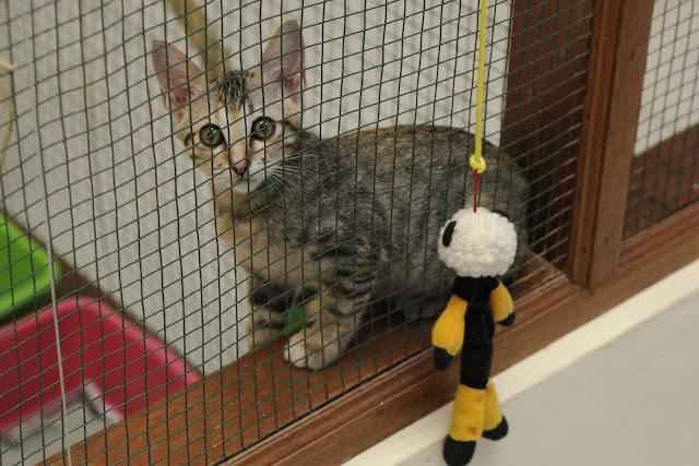 kitten shelter rescue bali