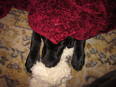 Foley's nose and eyes sticking out from under a blanket, his stuffy under his chin