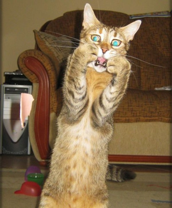 42 pictures of funny cats for this week, funny cat pictures, funny cats