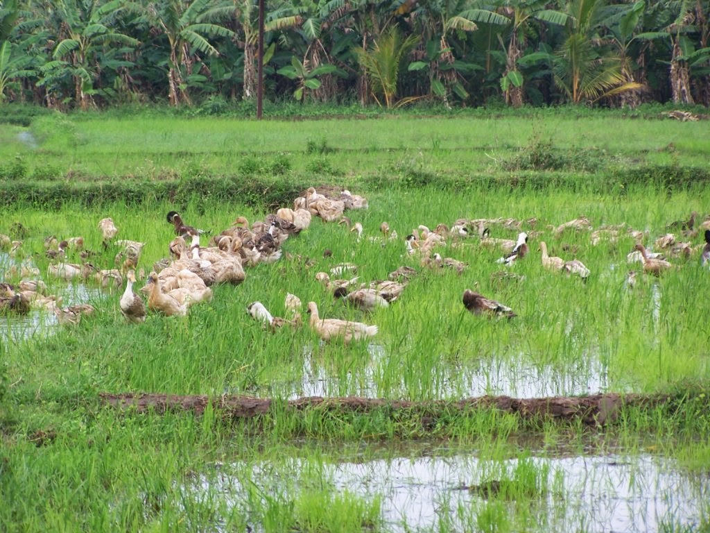 eco tourism india essay Tourism of kerala: explore things to do, places to visit, best time to visit, how to reach, history & culture of kerala to plan your trip.
