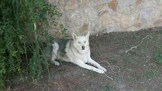 Το θηλυκο αυτο σκυλι βρισκεται απο τις 3/11/15 στη περιοχη Καλλιθεα Πεντελης συνορα με Ανθουσα εξω απο τον παιδικο σταθμο Αρτεμις και Ιασων.