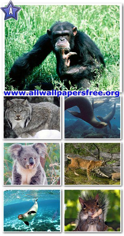 60 Amazing Animals Wallpapers 1280 X 1024 [Set 13]