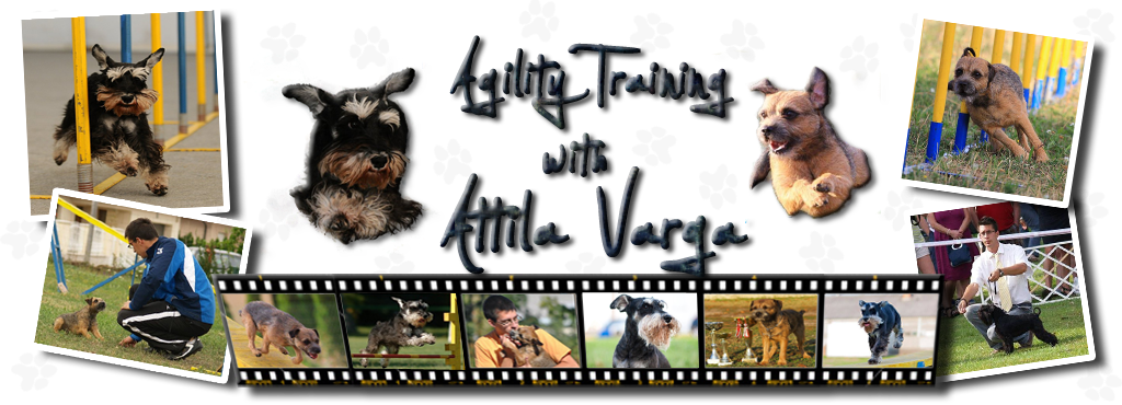 Agility training with Attila Varga