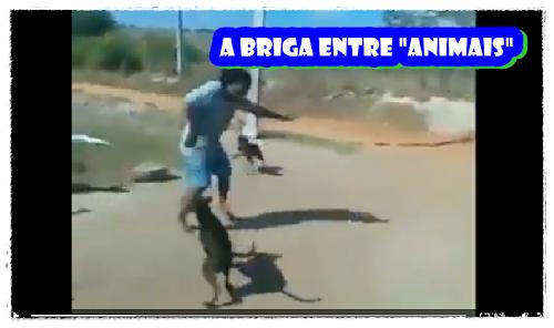 BRIGAS ENTRE ANIMAIS VIDEOS LEGAIS