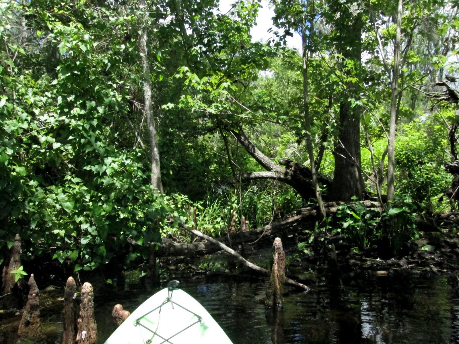 Wekiva River Monkeys The Lower Wekiva River