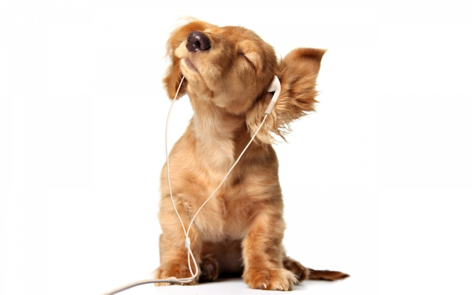 Puppy Enjoy Music