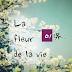 [Album] Miyu - La Fleur De La Vie