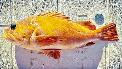 Variety Rockfish, local seafood San Diego