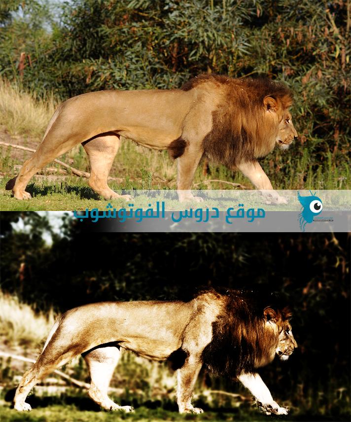 طريقة وضع تاثير خيالي على الصور بدون ملحقات Meaf