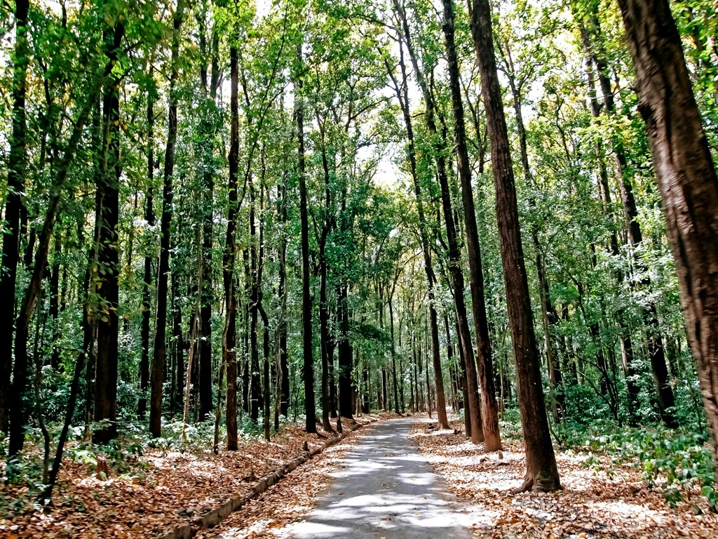 Jungle trails: Jim Corbett National Park