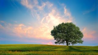 Ảnh đẹp thiên nhiên tổng hợp p1