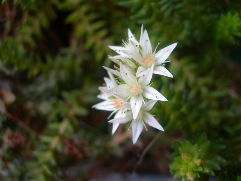 Cose di Clem: Piccoli fiori bianchi