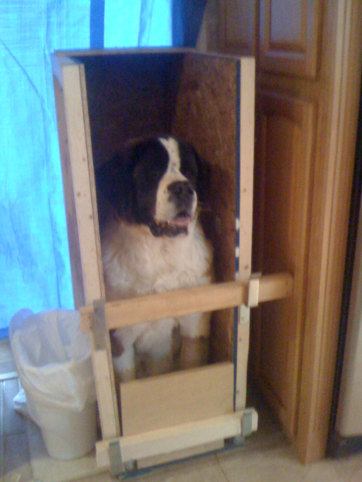 What is a  Bailey Chair  ? & MegaPaws ~ a battle lost to Canine MegaEsophagus: What is a