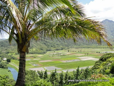 Hanalei Valley Lookout in Kauai, Hawaii