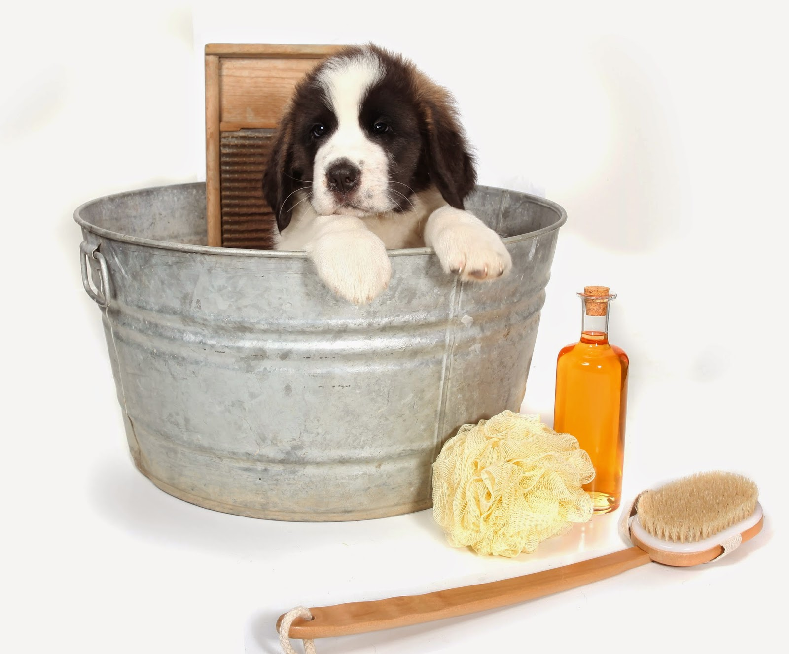 dog in bath tub with grooming supplies