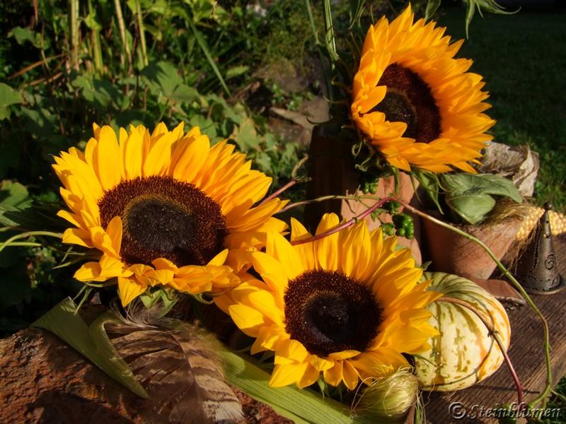 Herbstdeko Mit Sonnenblumen : Stein-Blumen: Herbstdeko mit ...