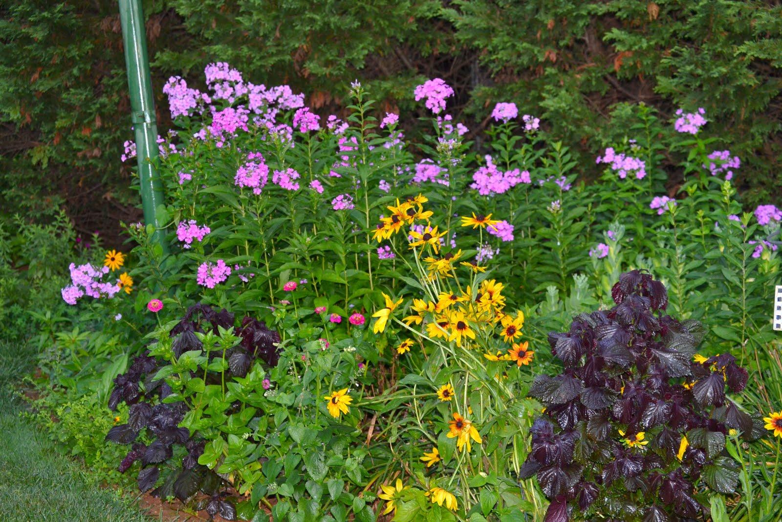 Клумбовые цветы с названиями и фото
