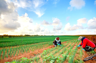 Nis në shtator projekti me fondet nga BERZH për Agrobiznesin