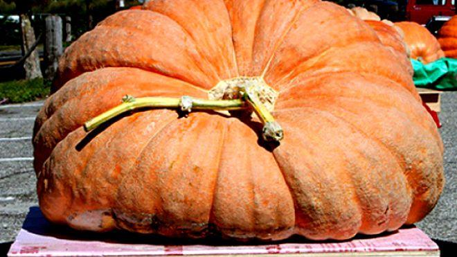 Heaviest Pumpkin