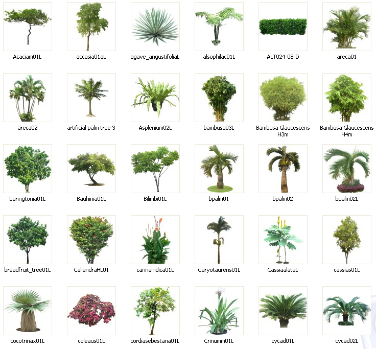 Flower Plant Png Png Plants Collection vo 01
