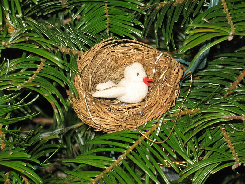 Living a Dream: Treasures on the Tree - Bird Nest