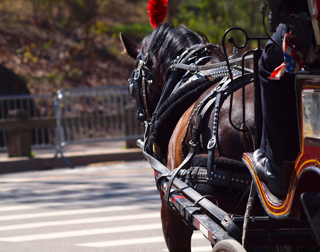 carriage horse, central park, nyc