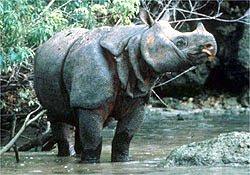 Binatang Terlangka di Dunia