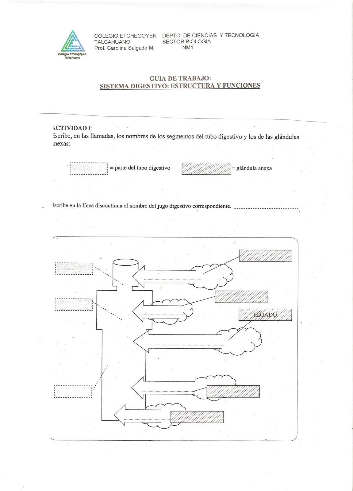 GUIA DE TRABAJO PRIMERO MEDIO B | BIOLOGIA