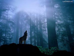 Os Lobos Proclamam!