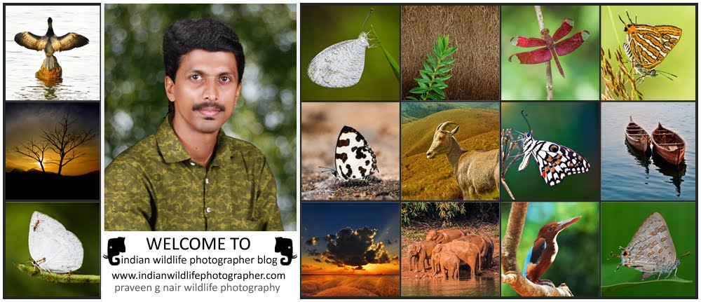 Indian Wildlife Photographer, Praveen G Nair, Wildlife Photography, Wildlife Photographer, Wildlife