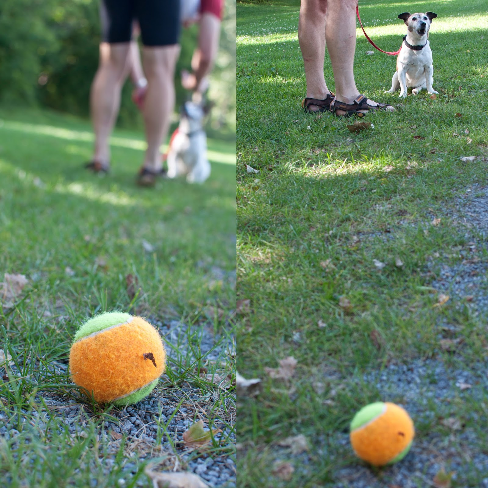 Image Result For Patience Dog Training