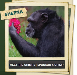 http://www.chimphaven.org/chimp-haven-applauds-the-working-groups-recommendations-2/