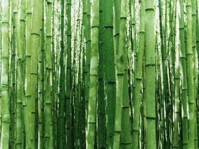 Cultivation Care And Maintenance Of The Bamboo