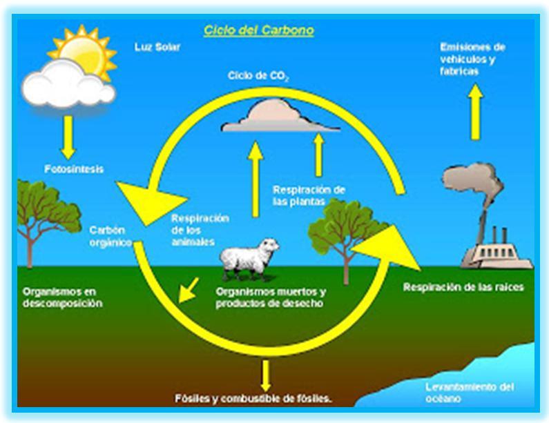 El ciclo del carbono en donde se encuentra el carbono for Donde se encuentra el marmol