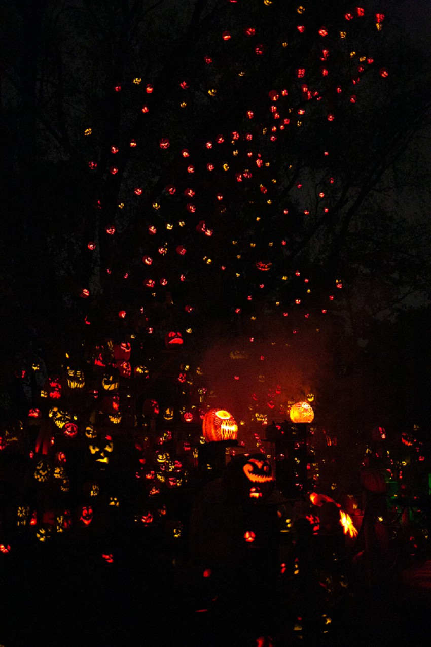 otis (odd things i've seen): your zoo is glowing: roger williams