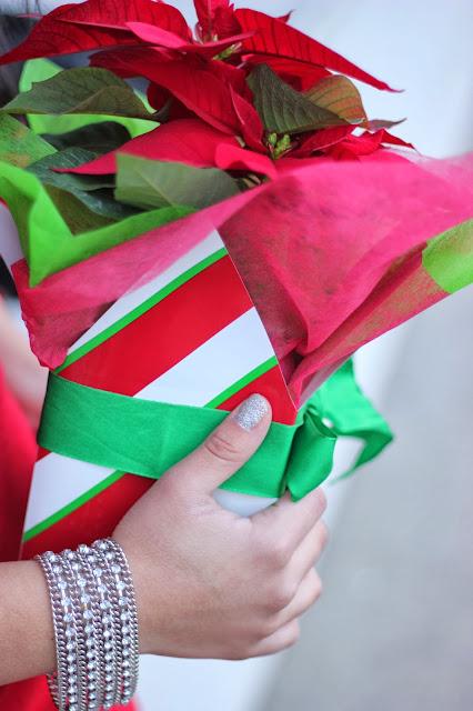 Christmas Red Poinsettia